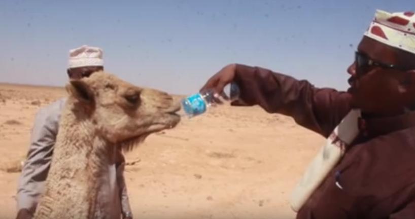 abaarta ka jirta somaliland